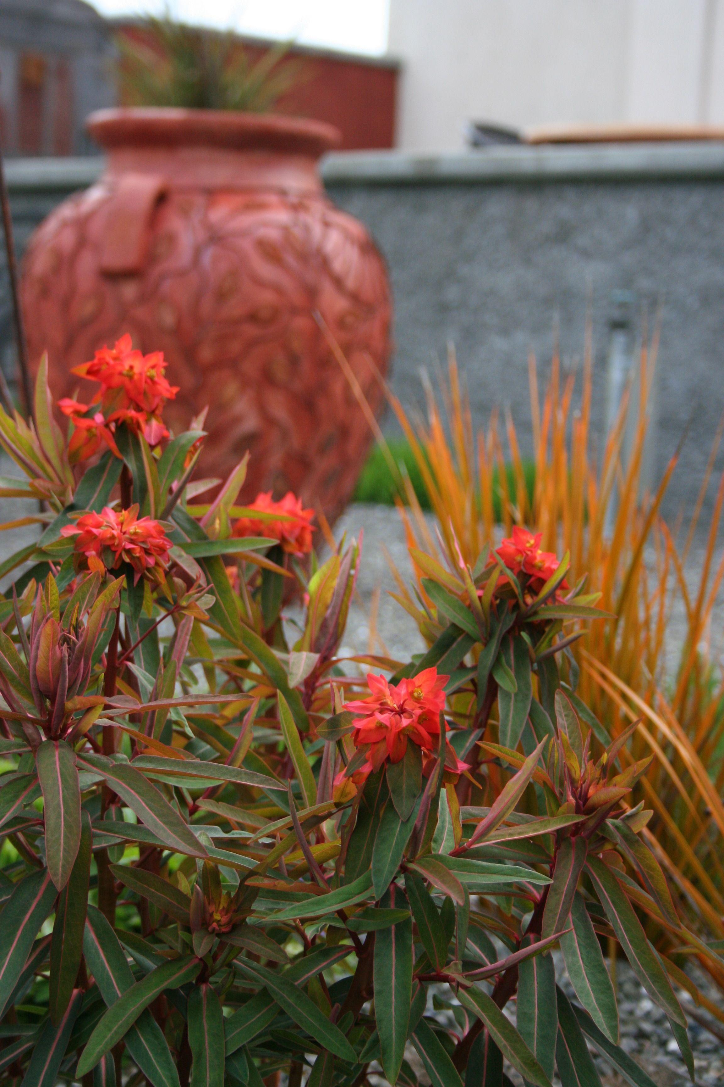 Mediterranean Garden Design: How to Create a Tuscan Garden   Outdoor ...