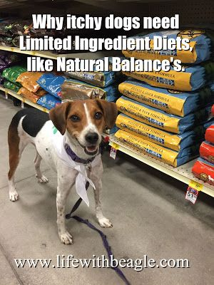 Does Your Dog Have Allergies Natural Balance Limited Ingredient