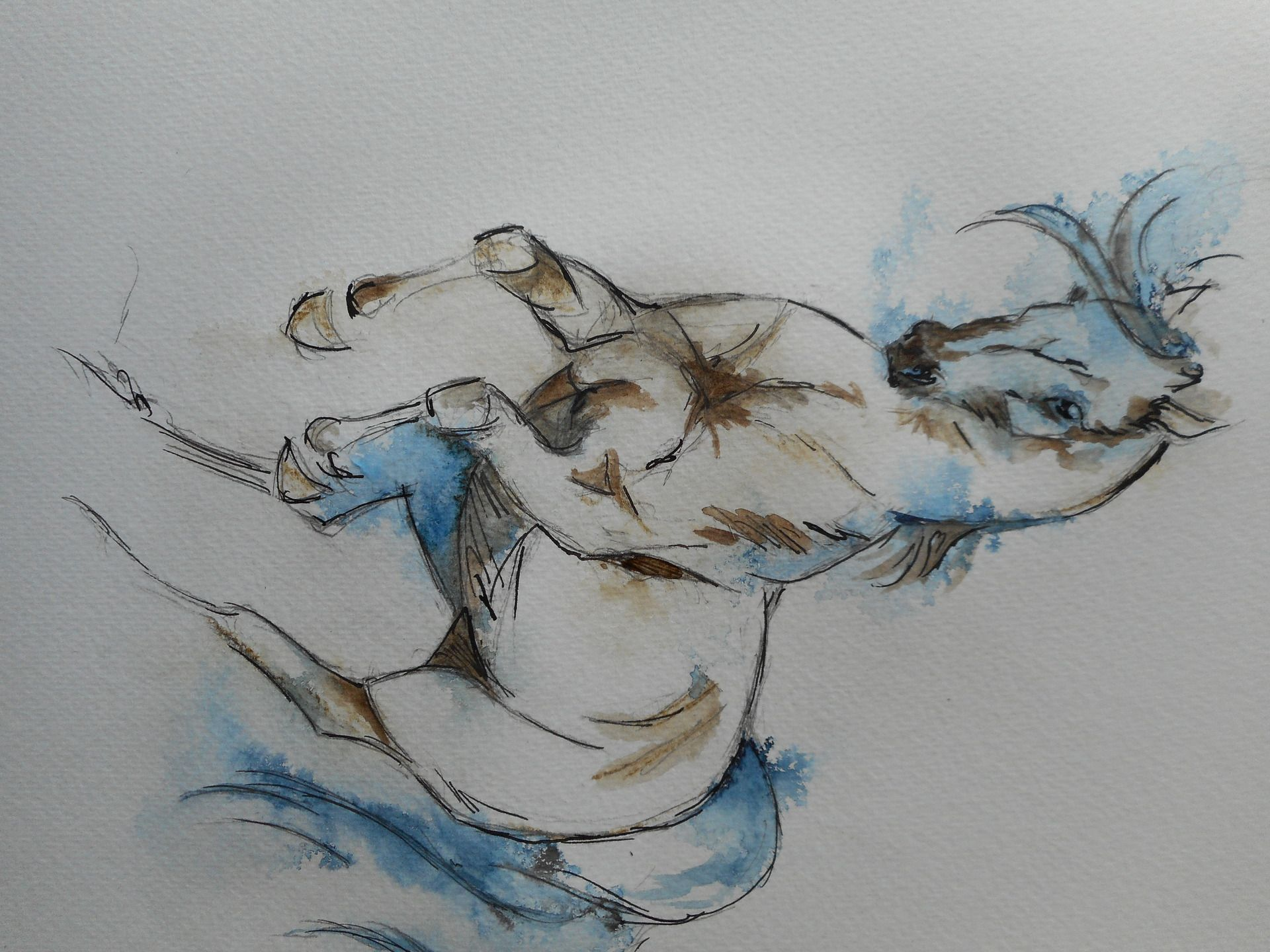 Cheval Cabre Aquarelle Et Encre De Chine Peintures Par Lorek
