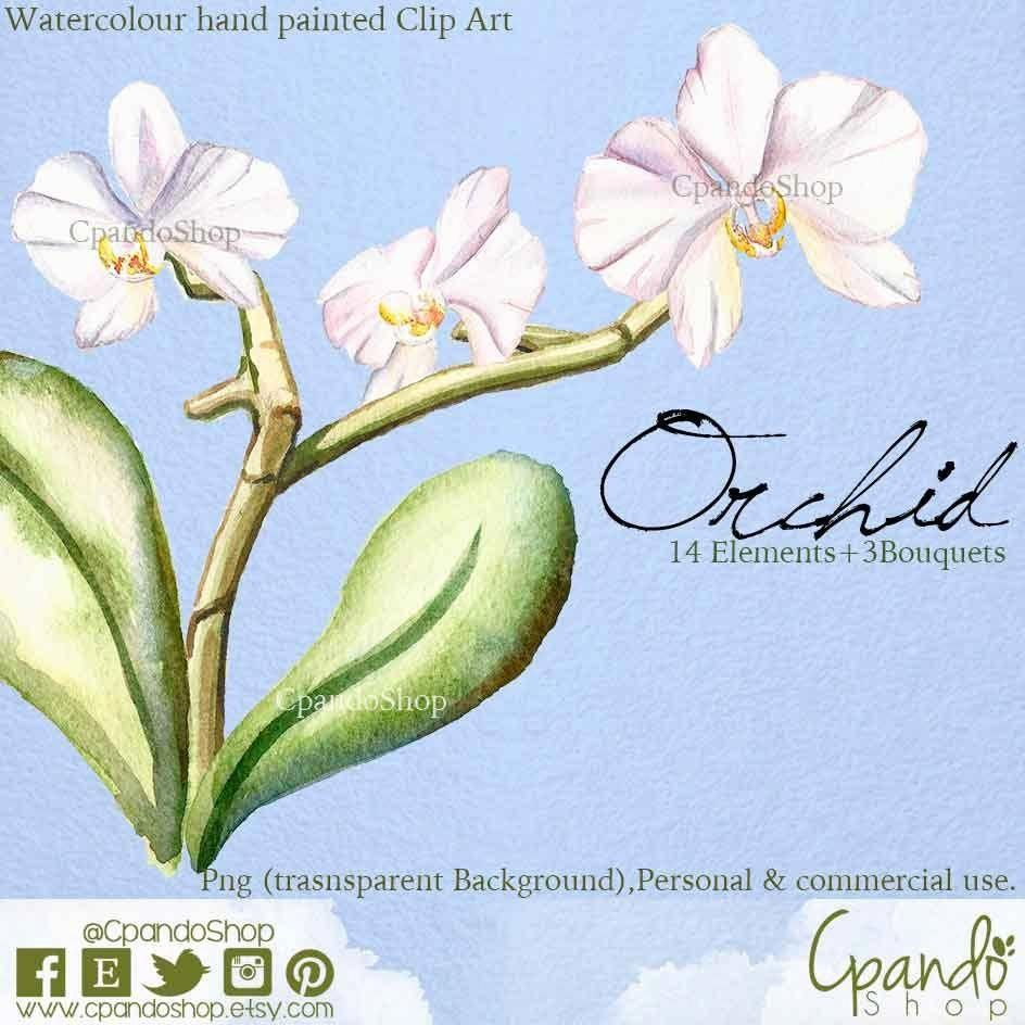 Orchid Clipart Instant Download Orchid Clip Art Orchid Flower Digital Flower Orchid Print Scrapbooking Embellishment Png Digital Flowers Clip Art Orchid Flower