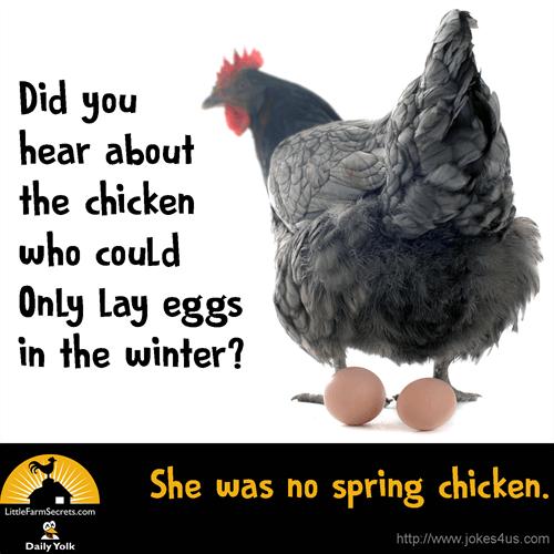 Joke Gallery Funny Jokes For Kids Chicken Jokes Cheesy Jokes