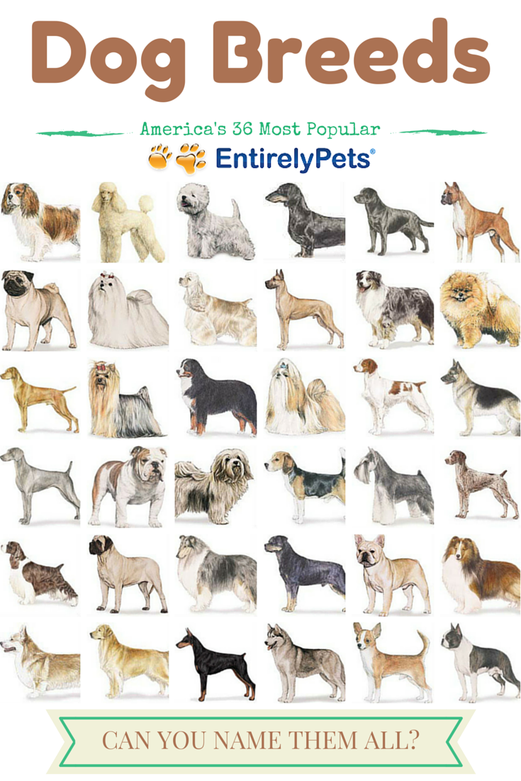All Dog Breeds Name And Pictures