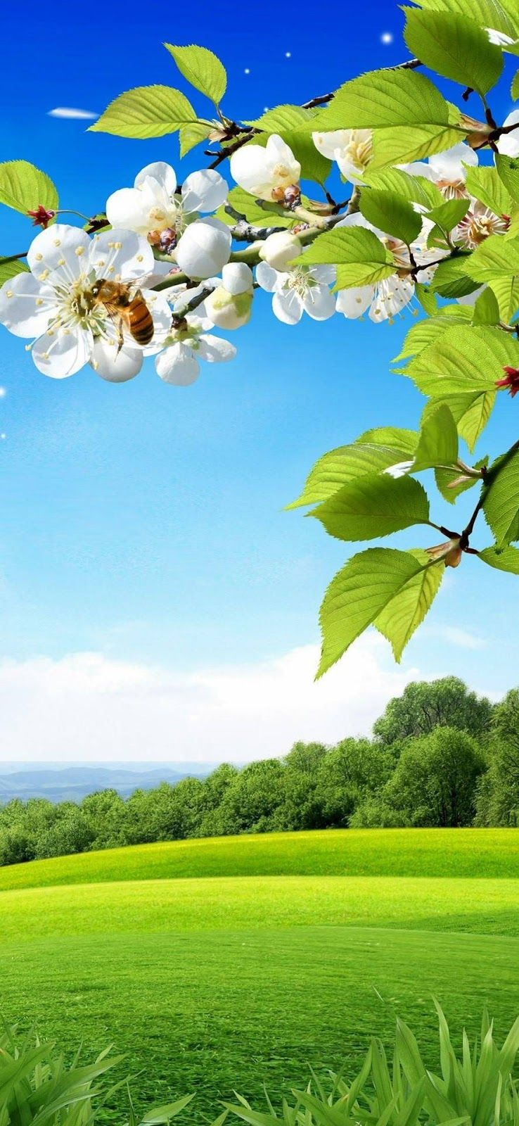 Nature Wallpaper Download In 2020 With Images Beautiful Nature Wallpaper
