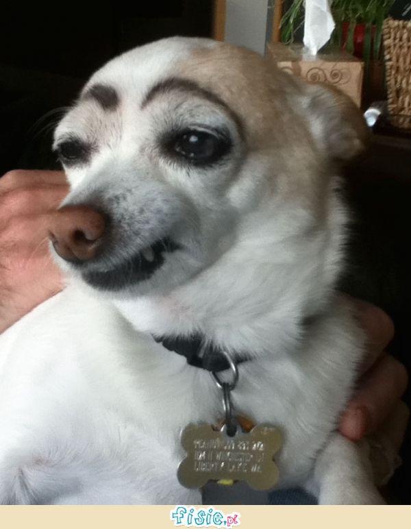 Psy z brwiami :D