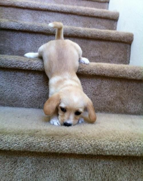 I hope I can make down these big stairs in time for dinner. This is harder than it looks.