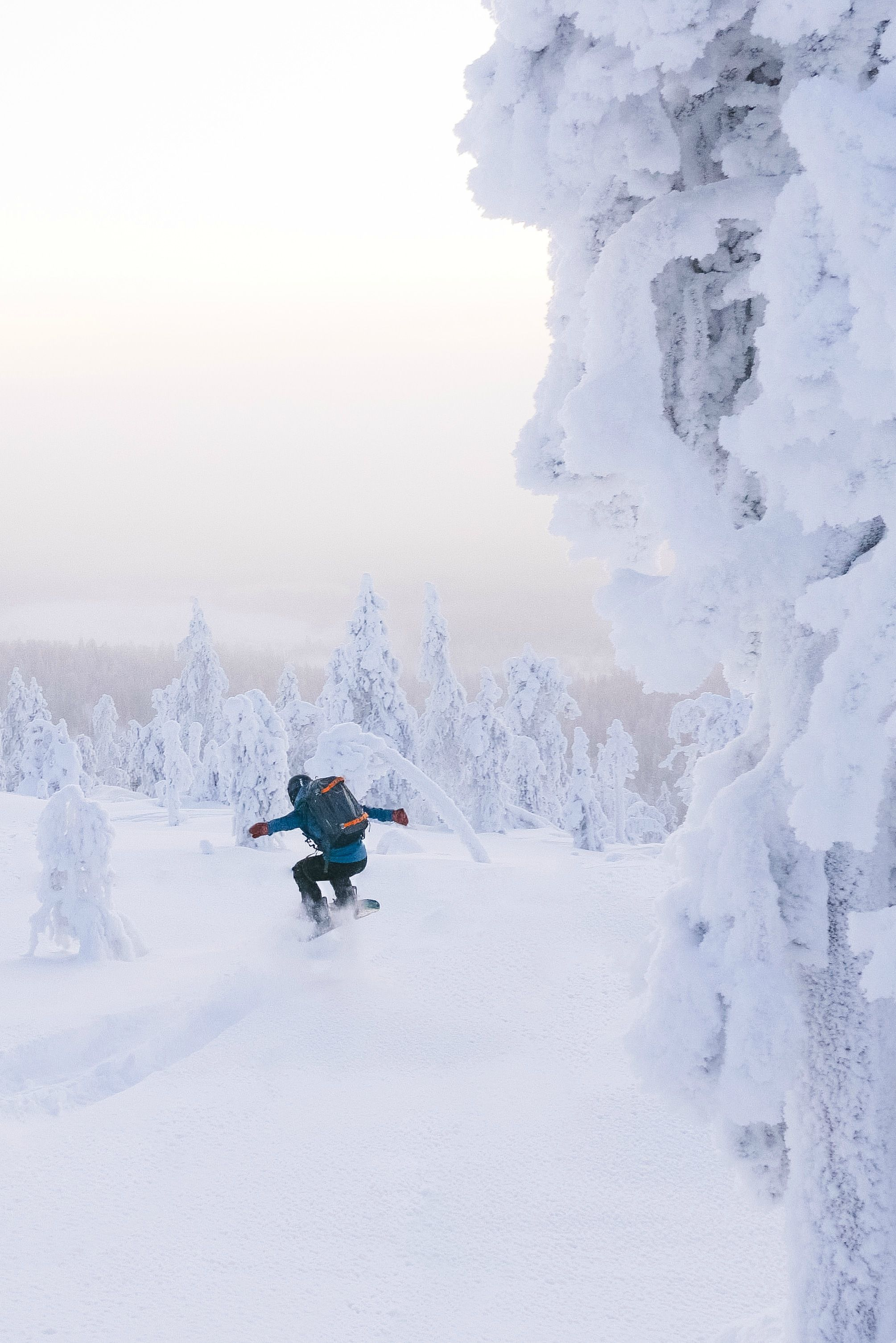 Skiing Snowboarding Photography Free Skiing Off Piste Back Country Skiing Pic Snowy Trees Snowboarding Photography Skiing Photography The Great Outdoors