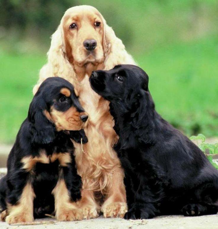Pin Auf Susse Hundebilder Sweet Dogs Funny Dog Pictures Lustige
