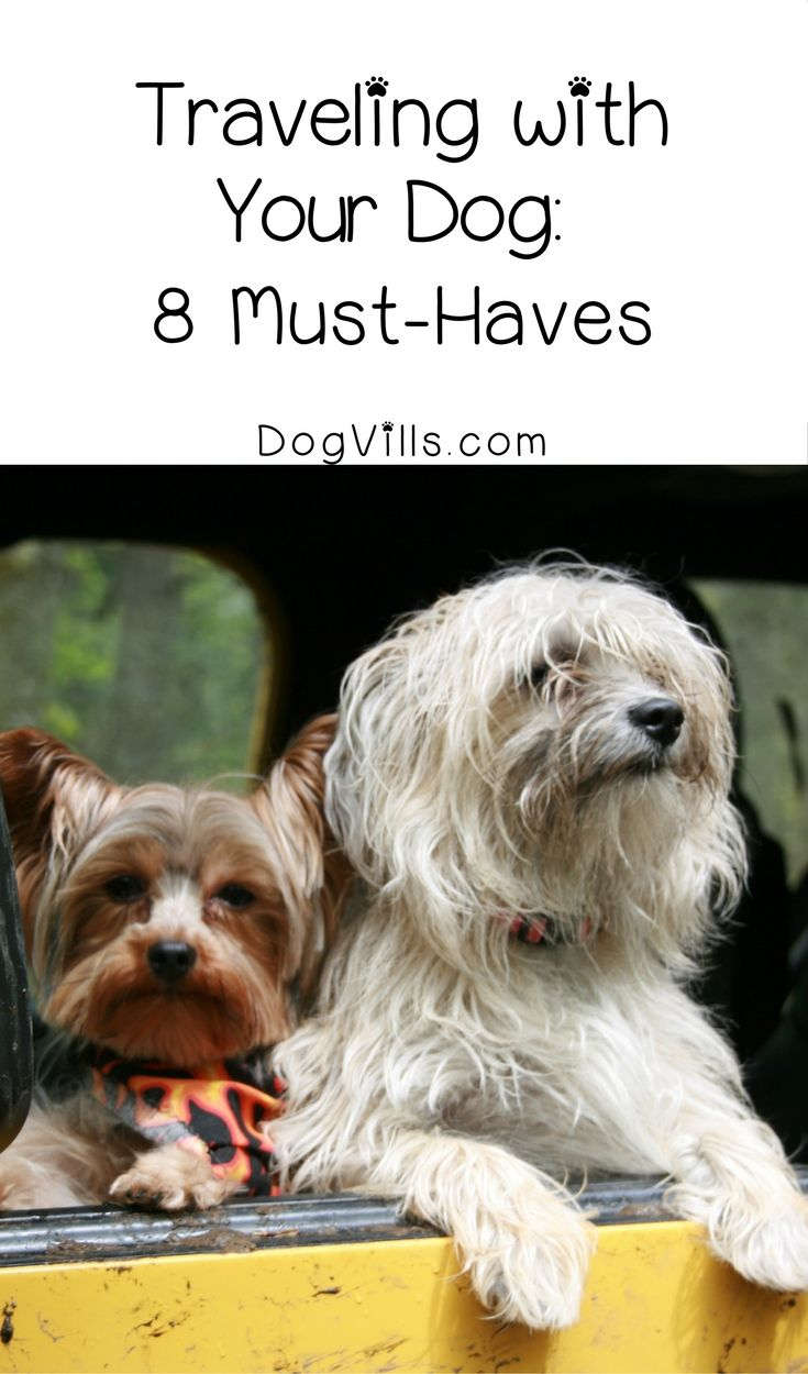 Traveling With Your Dog 8 Essentials To Pack Dogvills Yorkie Puppy Care Puppy Care Dog Friends