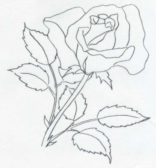 Rose Drawings09 Jpg 534 577 Roses Drawing Flower Line Drawings Flower Drawing
