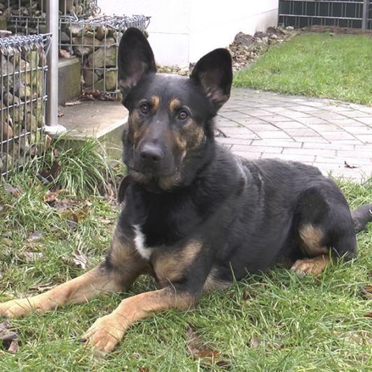 Hunde Tierheim Hannover (mit Bildern) Tiere, Tierheim