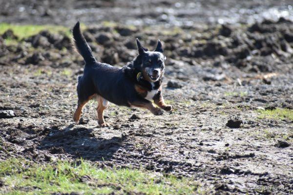 Pin By Terri Batchelor On Poms In 2020 Pet Adoption Boston
