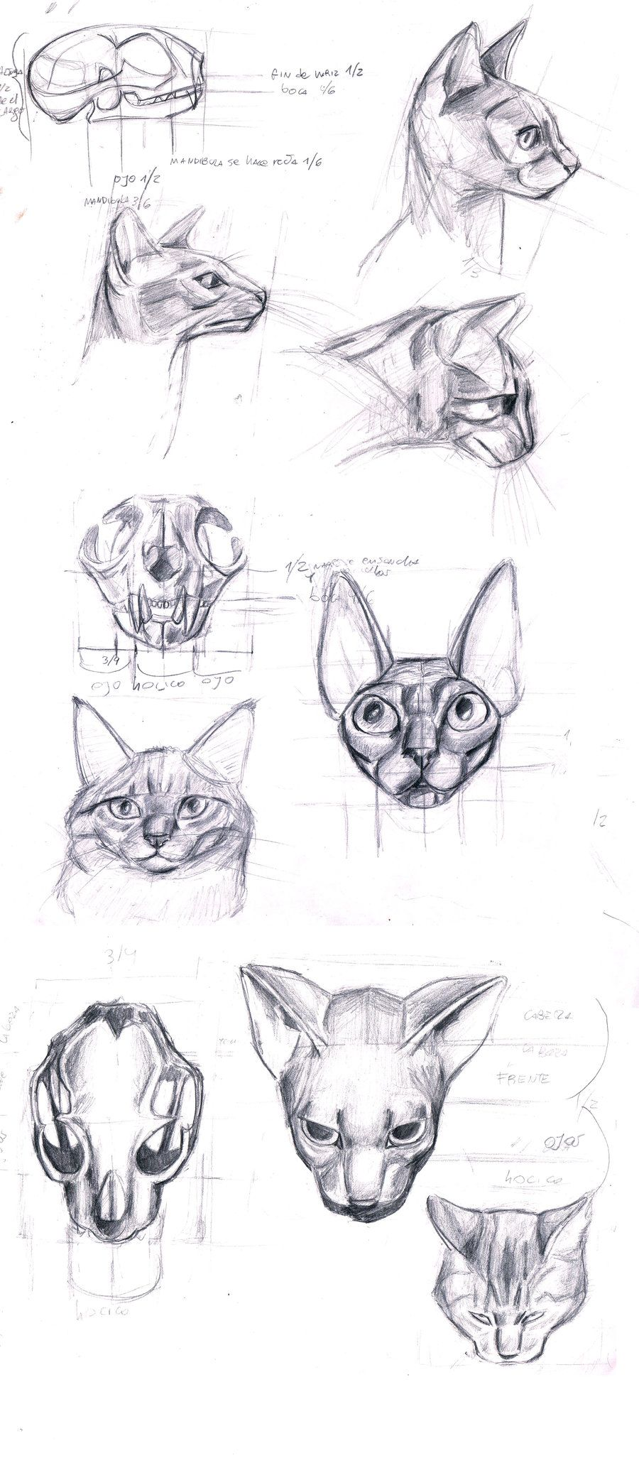 anatomy of the cat\'s head by ~sofmer on deviantART | Expressions and ...