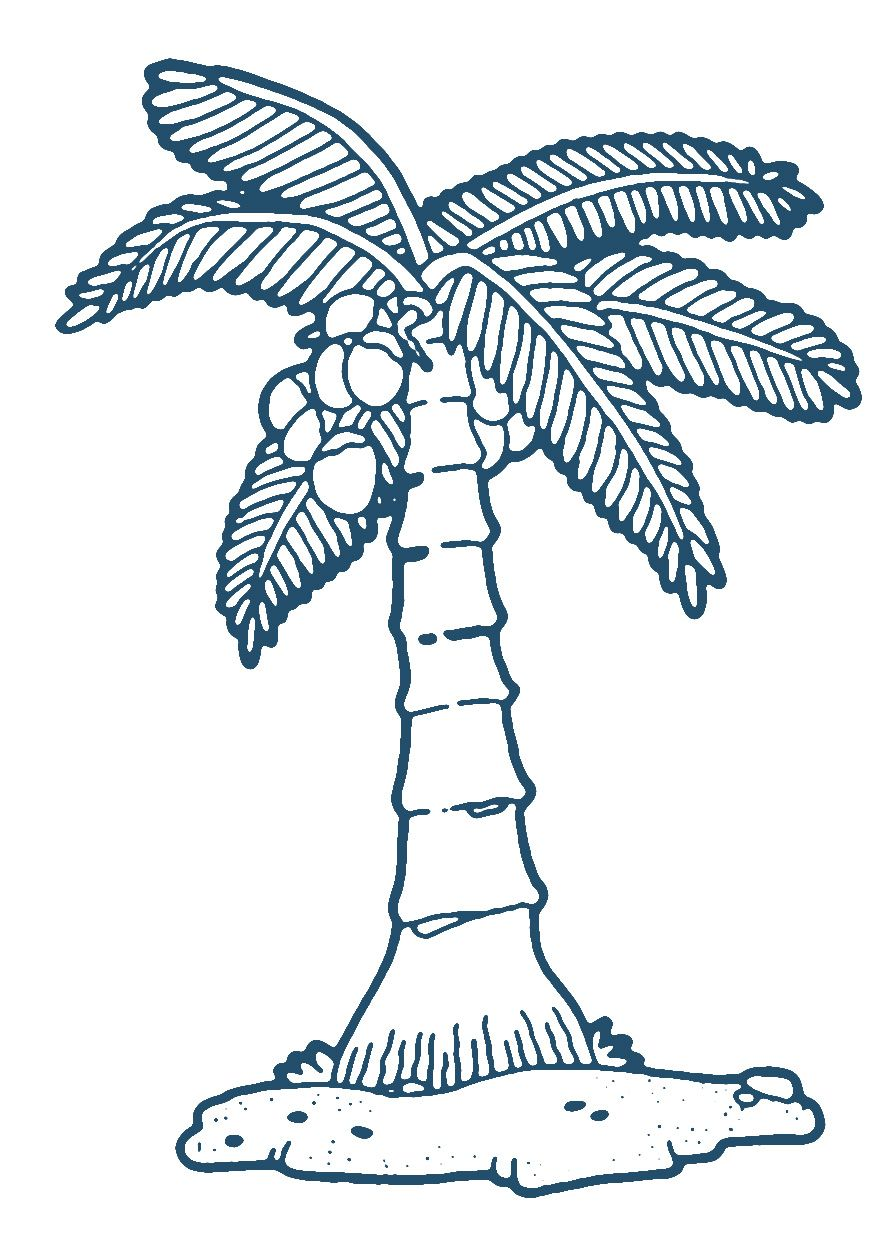 Coconut Tree Fruit Coloring Pages Coconut Fruit
