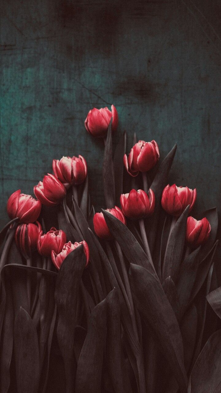 Stylized Photo 3dRose Alexis Photography T-Shirts Soft Pink Colors Beautiful Decorative Tulip Flowers Flowers Tulips