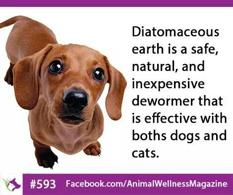Diatomaceous Earth Is A Safe Natural Inexpensive Dewormer Diatomaceous Earth Dog Cat Doggy