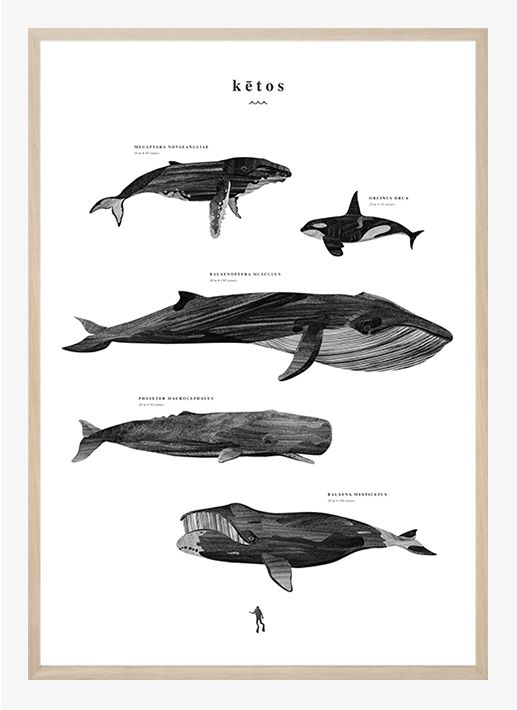 Kētos by Coco Lapine | Poster from theposterclub.com 39€