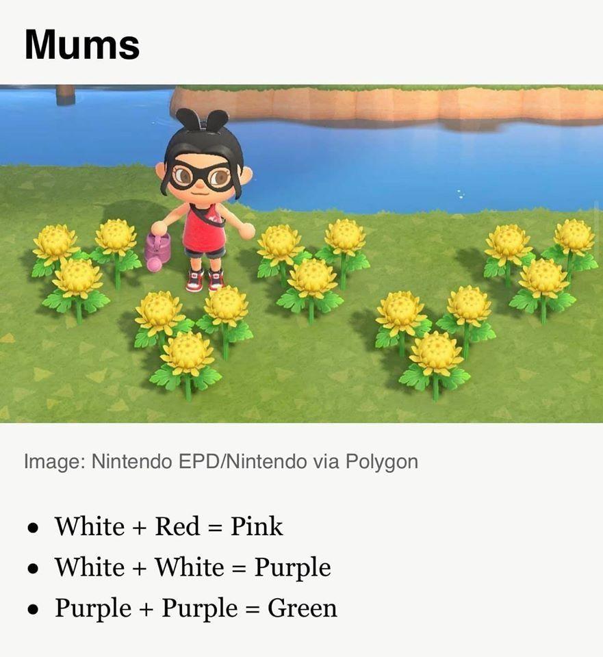 animal crossing flowers hybrid guide