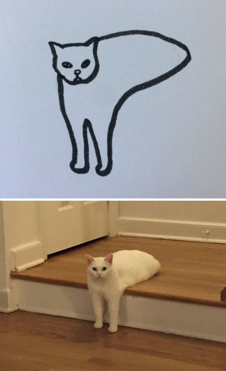 This Artist Was Told To Give Up Drawing Cats But That Didn T Stop Them Humor Divertido Sobre Animales Chibi Dibujos Dibujos De Gatos