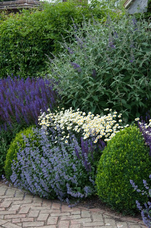 Mixed herbaceous border buxus salvia and gardens for Herbaceous border design examples