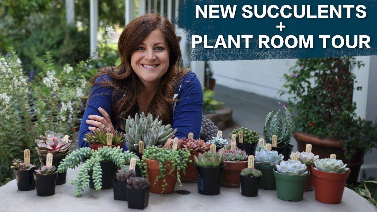 New Succulents Plant Room Tour Garden Answer
