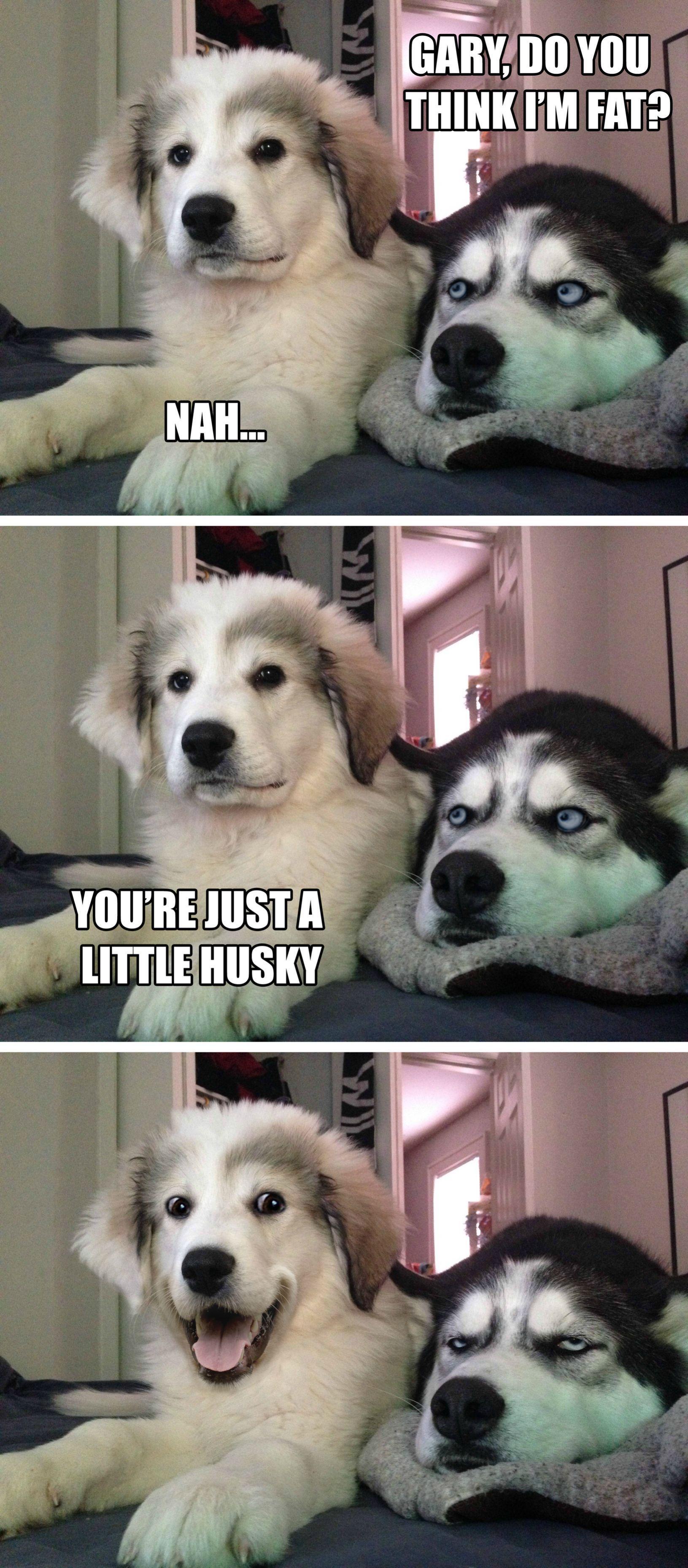 Gary S Getting The Hang Of It Lolsnaps Dog Jokes Dog Memes Clean Dog Puns