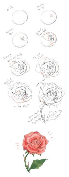 how to draw a rose tutorial by cherrimut on tumblr zeichnen pinterest zeichnen zeichnen. Black Bedroom Furniture Sets. Home Design Ideas