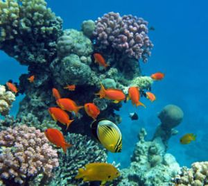 Most coral reefs are at risk unless climate change is drastically limited, study shows