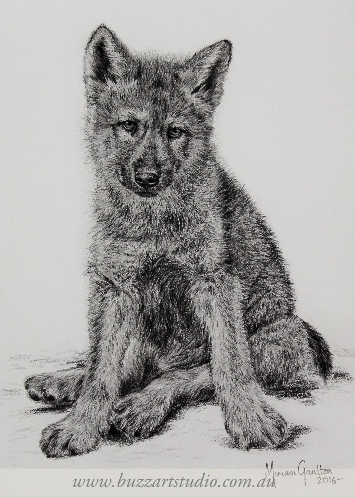 drawing wildlife realism wolf cub | Whitetail deer ...