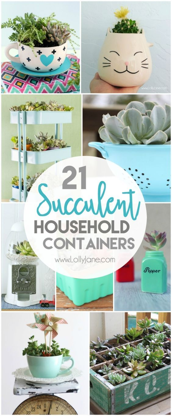 21 household succulent containers | Succulent containers, Household ...