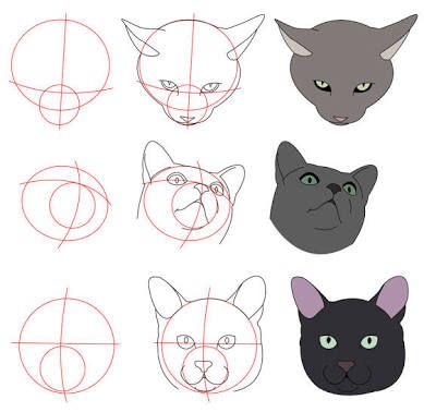 Image result for anatomy domestic cat - drawing | Anatomía Animal ...