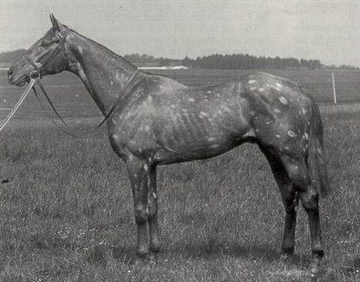 tetrarch horse - Google Search