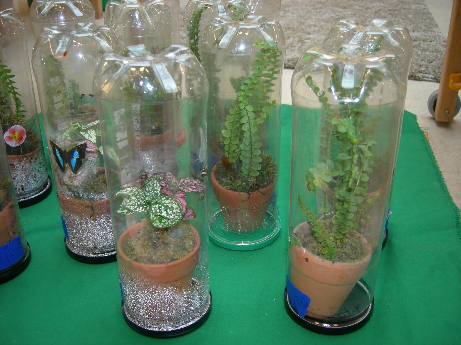 Craft containers with lids - Recycle Tennis Ball Containers Google Search