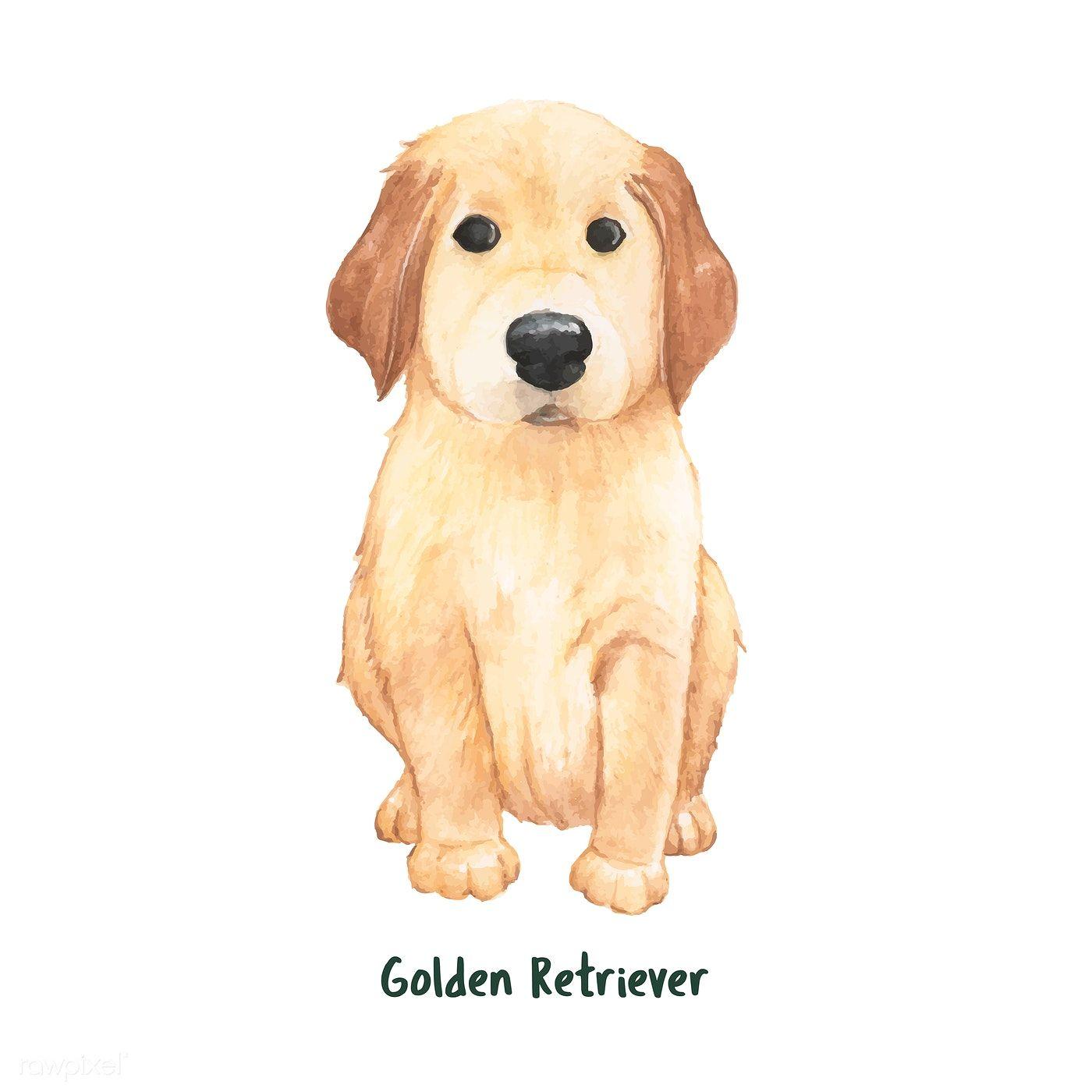 Hand Drawn Golden Retriever Dog Premium Image By Rawpixel Com Aum In 2020 Golden Retriever Cartoon Golden Retriever Illustration Golden Retriever Drawing