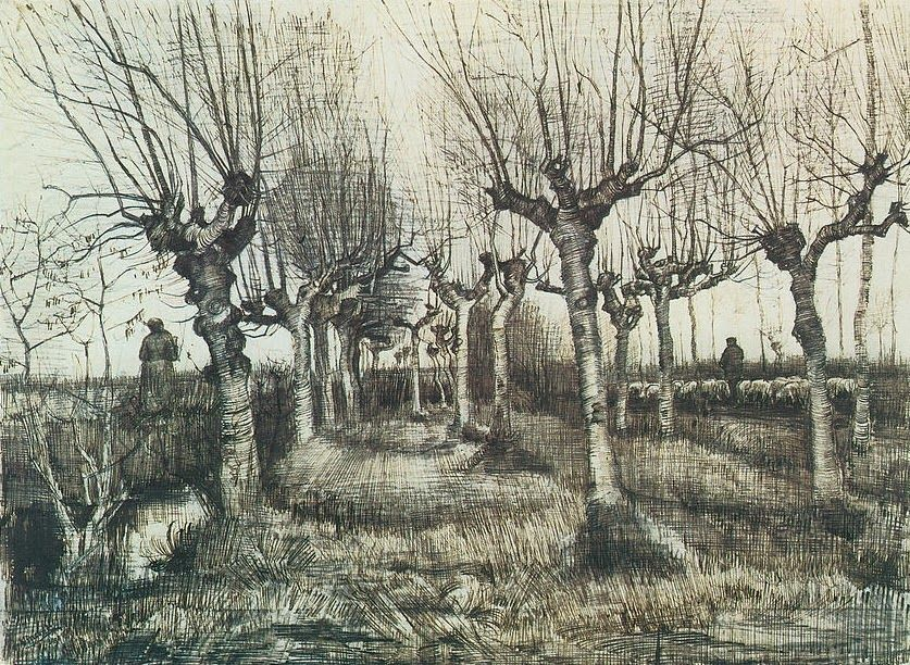 Van Gogh Drawings Trees Pollard Birches ink/ W...