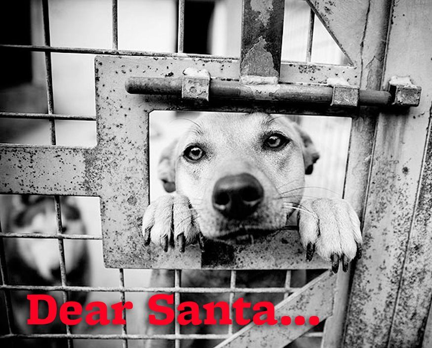 Dear Santa Please Find All The Homeless Pets A Home For Christmas Animal Shelter Save Animals Dogs