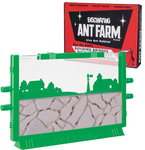 Fascinating Ant Farm