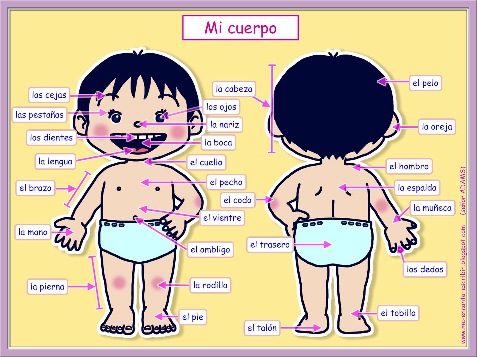 Me encanta escribir en español: Mi cuerpo. (Actividad interactiva ...