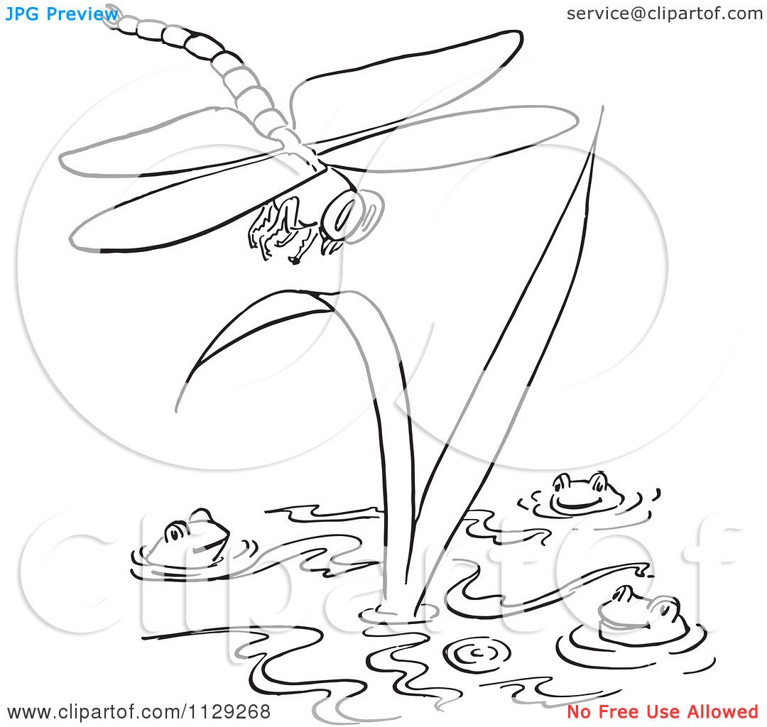 Cute Dragonfly Coloring Pages Picture Cartoon Clipart Of An