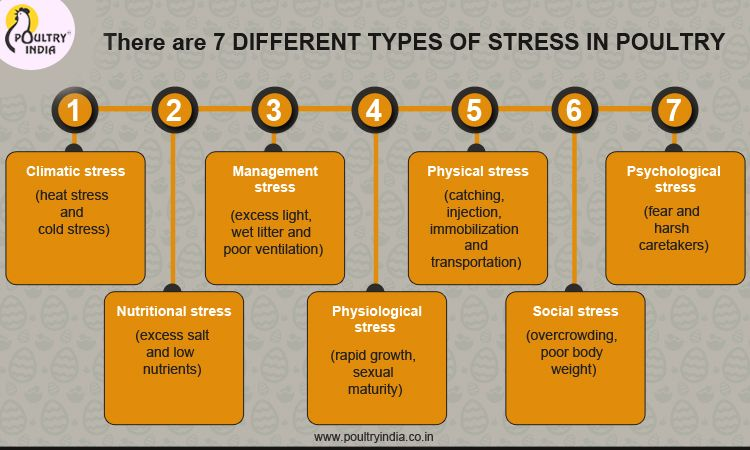 7 types of STRESS IN POULTRY INDUSTRY visit us @ www ...