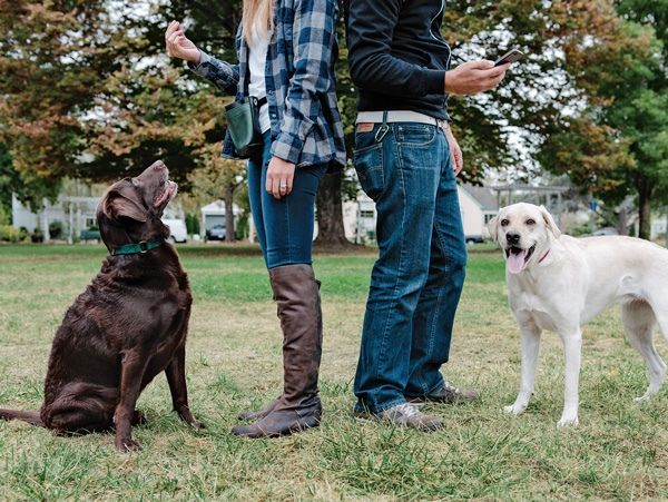 Do Women And Men Approach Dog Training Differently Dog Training
