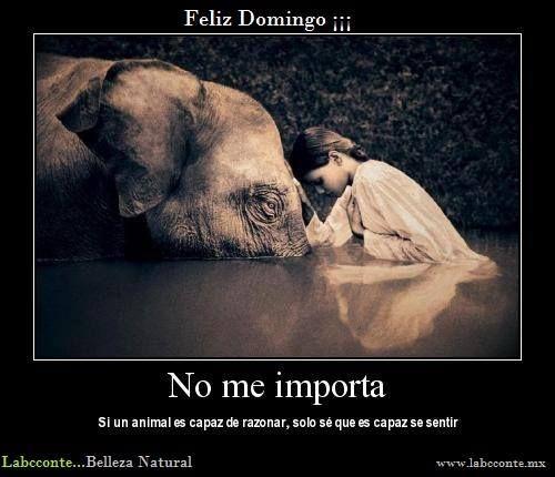 Que el dolor (de cualquier individuo, sea animal humano o no), no me sea indiferente... Labcconte...Belleza Natural www.labcconte.mx