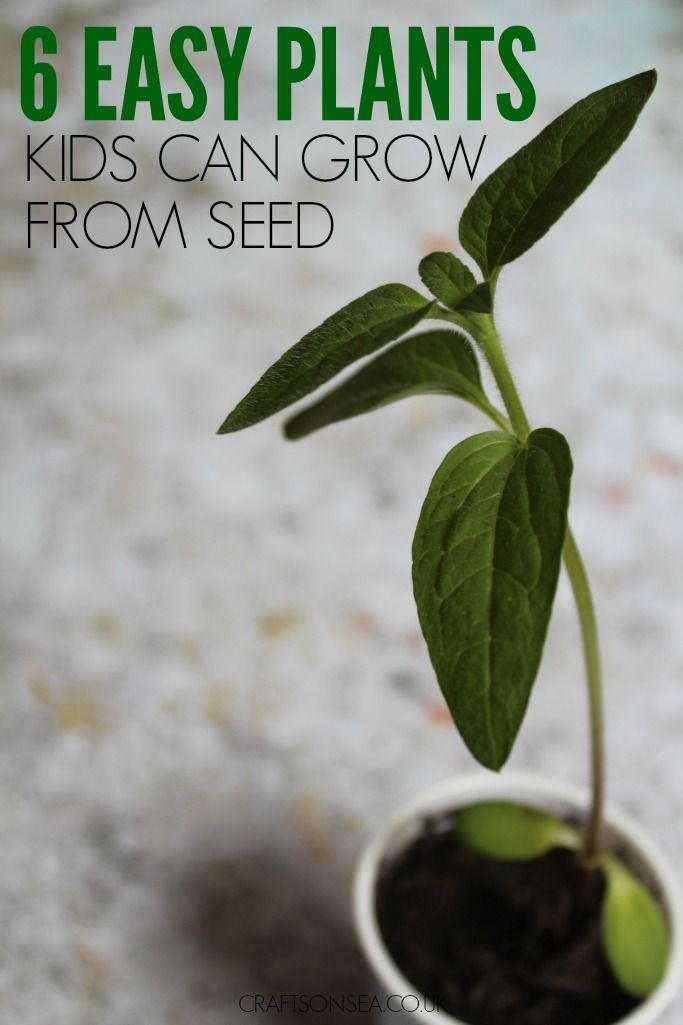 6 Easy Plants Kids Can Grow From Seed
