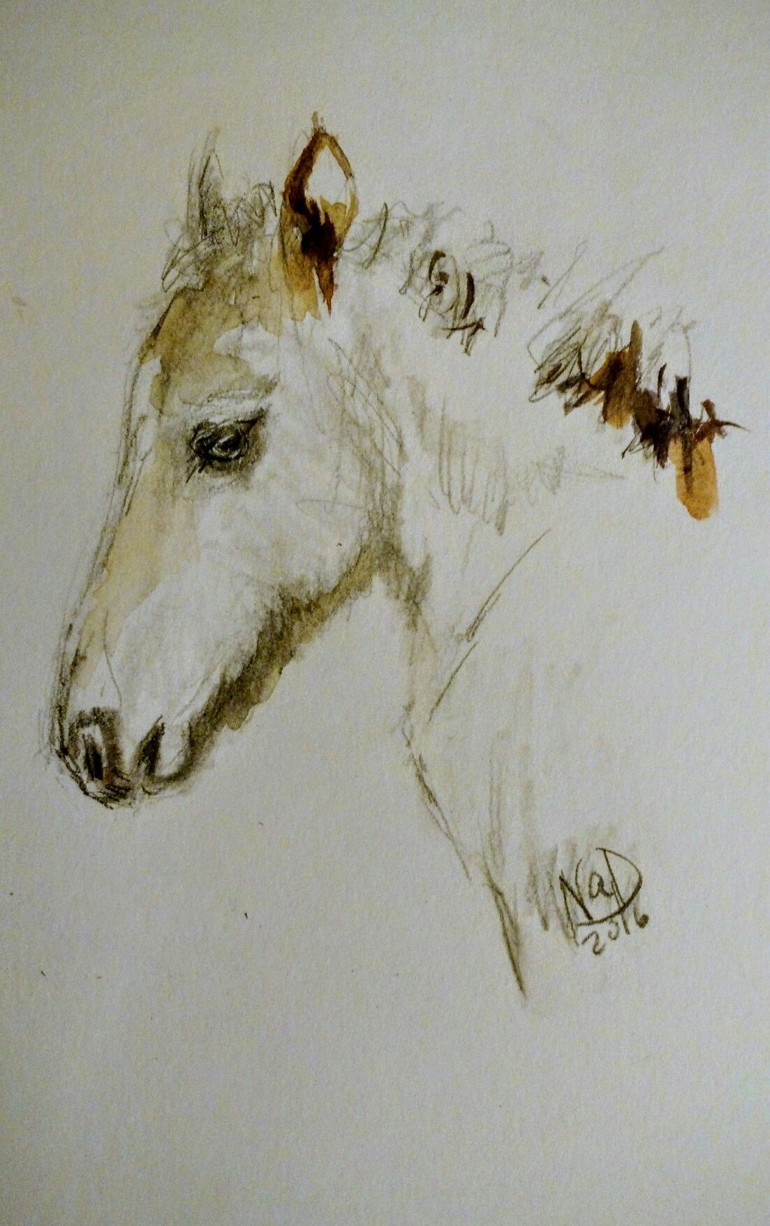 My sketch of an Icelandic horse foal in graphite and watercolor. #drawing #sketch #horseart #foal #icelandichorse #waysideartist