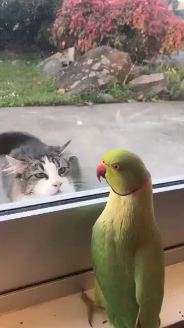 Photo of Cat Vs Parrot