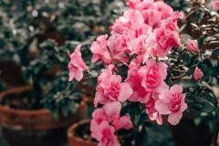 Hortensien – pflanzen, pflegen, vermehren #hortensienvermehren