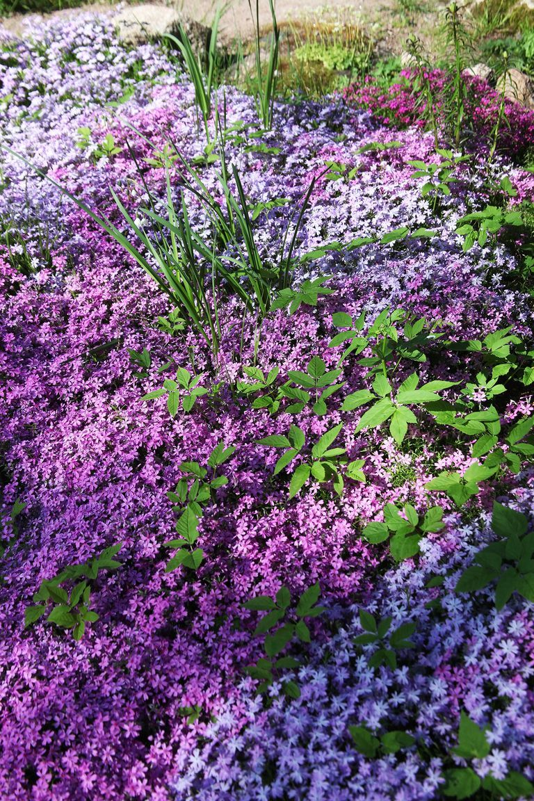 of the best ground cover perennials for your yard landscape