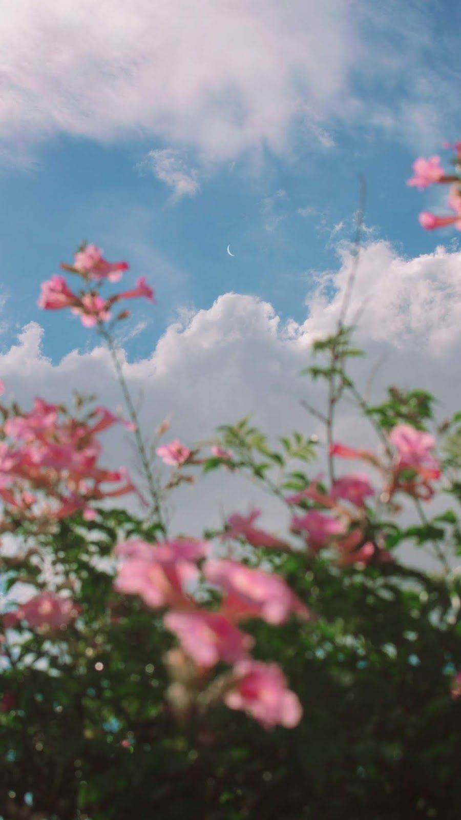 Pink Flowers Under The Blue Sky Nature Photography Sky Aesthetic Scenery Wallpaper
