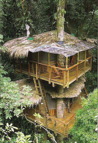 New Treehouses of the World (book), 6 Casas de arbol, El arbol y Casas - casas en arboles