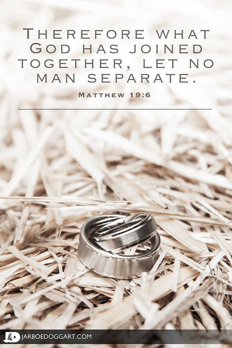 beautiful picture of the and groom s wedding rings