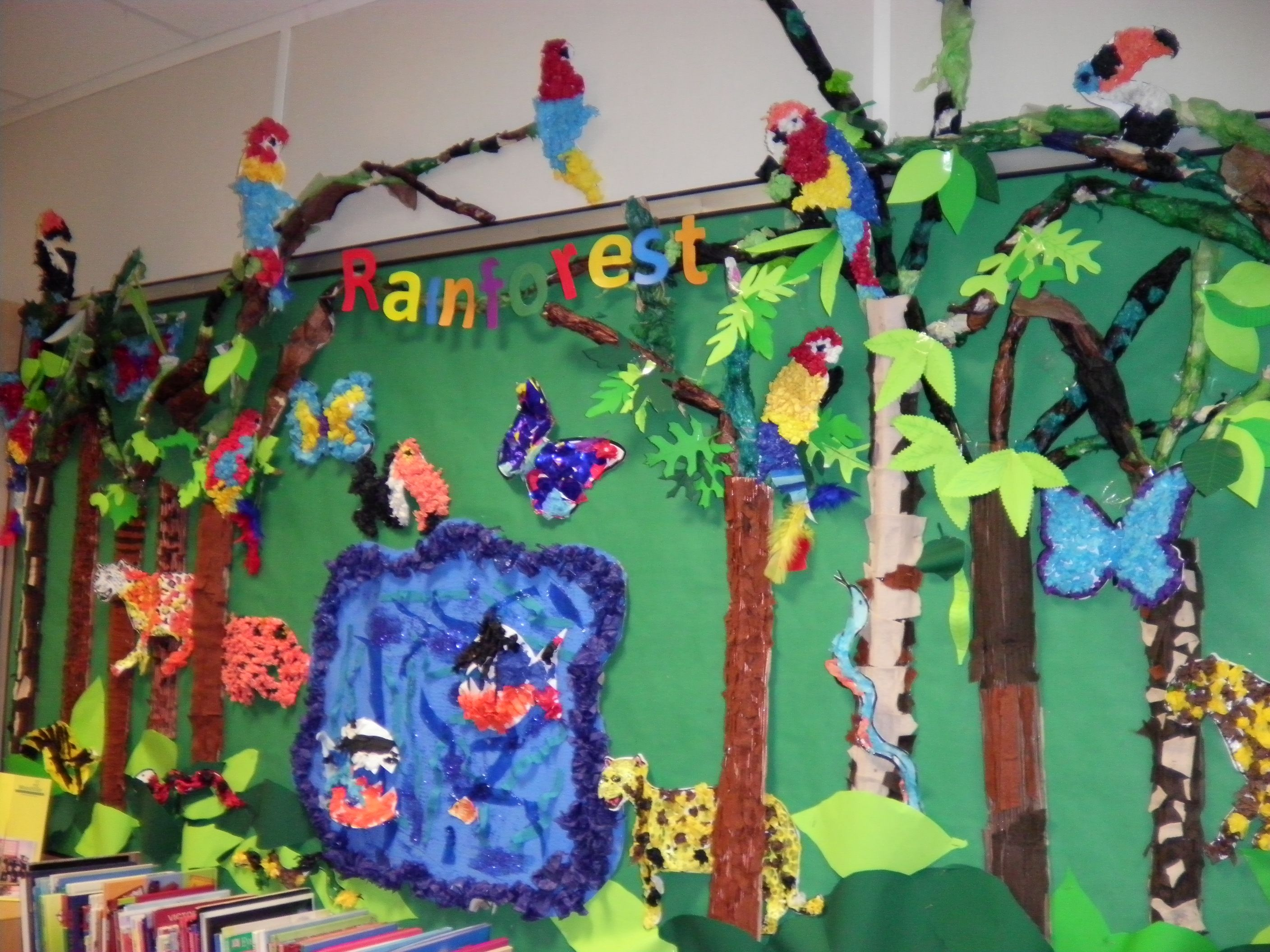 Rainforest Wall Display
